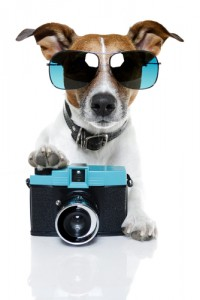 photo_dog